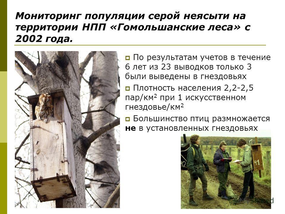 Мониторинг популяции серой неясыти на территории НПП «Гомольшанские леса» с 2002 года. По результатам учетов в течение 6 лет из 23 выводков только 3 были выведены в гнездовьях Плотность населения 2,2-2,5 пар/км 2 при 1 искусственном гнездовье/км 2 Бо