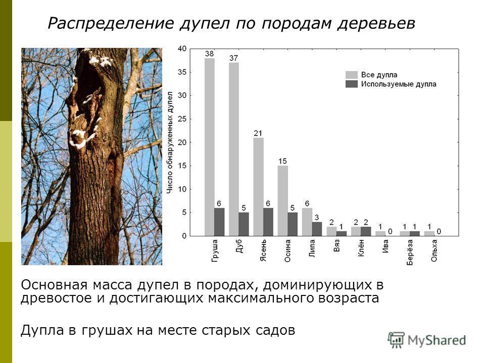 Основная масса дупел в породах, доминирующих в древостое и достигающих максимального возраста Дупла в грушах на месте старых садов Распределение дупел по породам деревьев