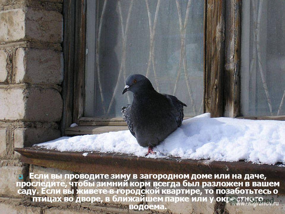 Если вы проводите зиму в загородном доме или на даче, проследите, чтобы зимний корм всегда был разложен в вашем саду. Если вы живете в городской квартире, то позаботьтесь о птицах во дворе, в ближайшем парке или у окрестного водоема.