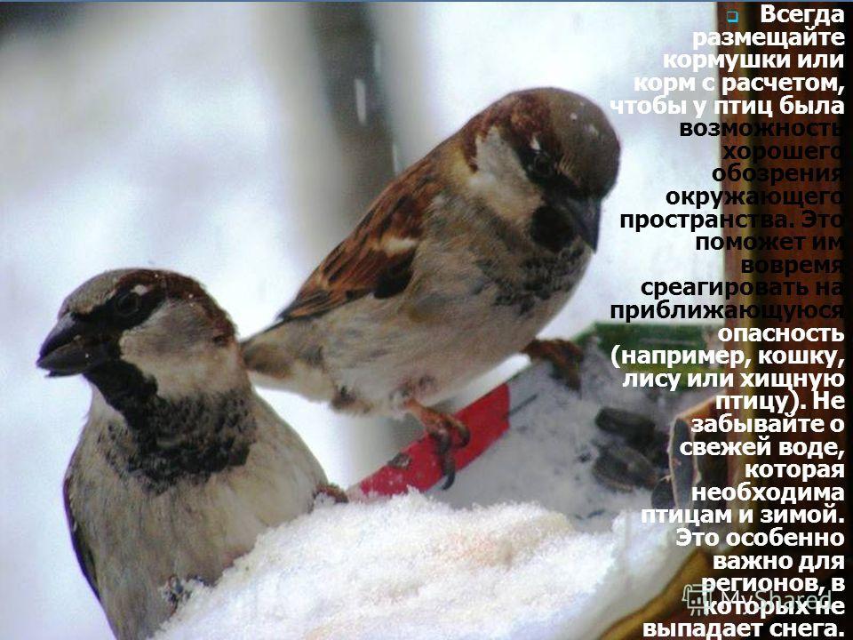 Всегда размещайте кормушки или корм с расчетом, чтобы у птиц была возможность хорошего обозрения окружающего пространства. Это поможет им вовремя среагировать на приближающуюся опасность (например, кошку, лису или хищную птицу). Не забывайте о свежей