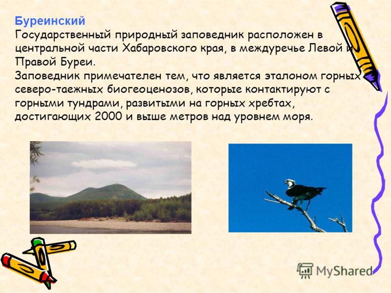 Буреинский Государственный природный заповедник расположен в центральной части Хабаровского края, в междуречье Левой и Правой Буреи. Заповедник примечателен тем, что является эталоном горных северо-таежных биогеоценозов, которые контактируют с горным