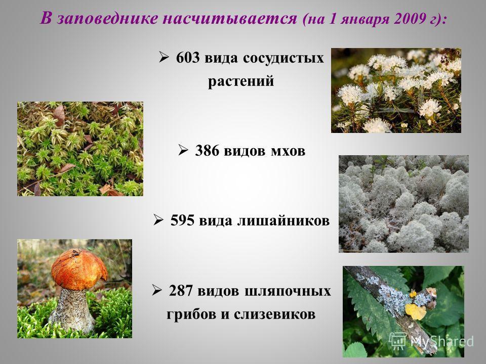 В заповеднике насчитывается (на 1 января 2009 г): 603 вида сосудистых растений 386 видов мхов 595 вида лишайников 287 видов шляпочных грибов и слизевиков
