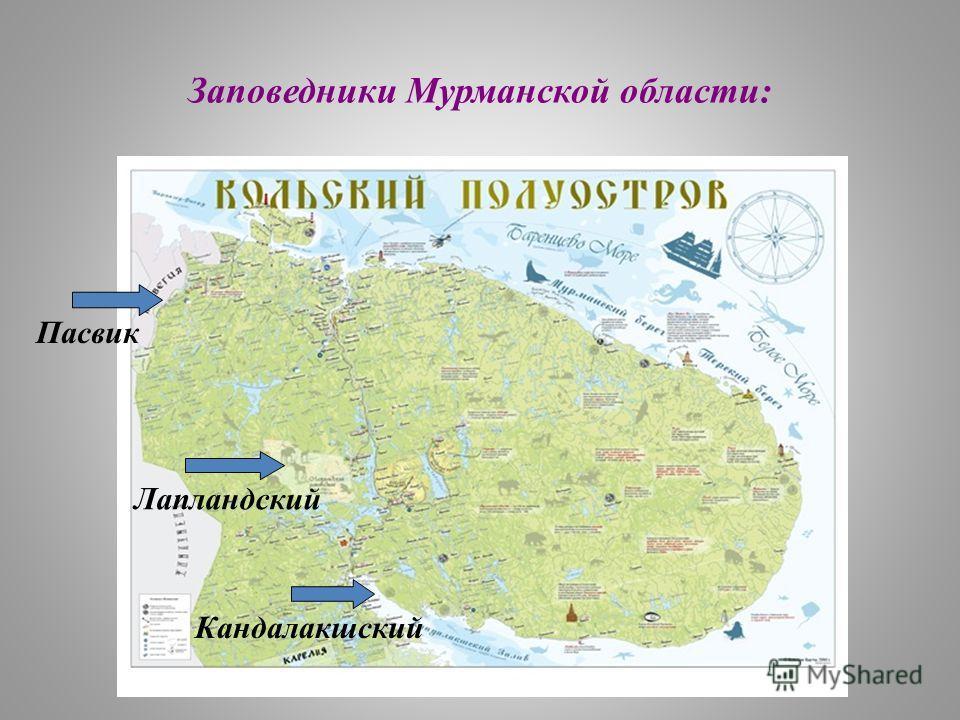 Заповедники Мурманской области: Пасвик Лапландский Кандалакшский