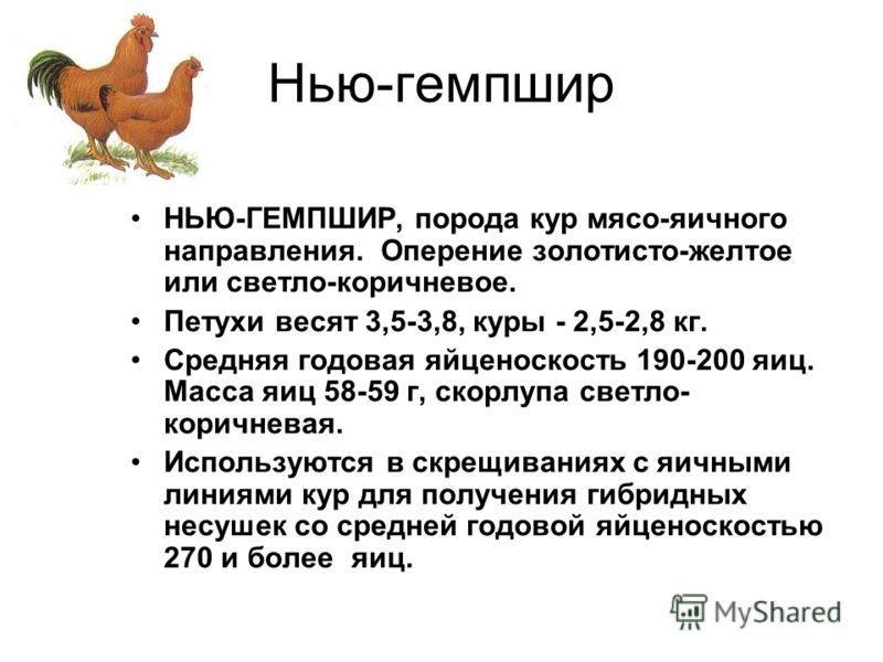 Нью-гемпшир НЬЮ-ГЕМПШИР, порода кур мясо-яичного направления. Оперение золотисто-желтое или светло-коричневое. Петухи весят 3,5-3,8, куры - 2,5-2,8 кг. Средняя годовая яйценоскость 190-200 яиц. Масса яиц 58-59 г, скорлупа светло- коричневая. Использу