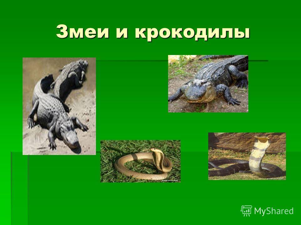 Змеи и крокодилы