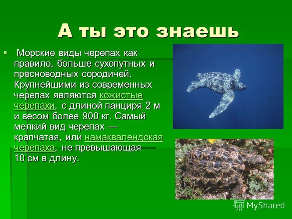 А ты это знаешь Морские виды черепах как правило, больше сухопутных и пресноводных сородичей. Крупнейшими из современных черепах являются кожистые черепахи, с длиной панциря 2 м и весом более 900 кг. Самый мелкий вид черепах крапчатая, или намаквален