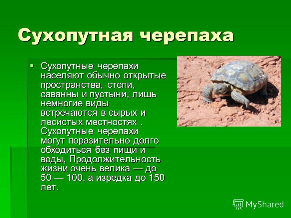 Сухопутная черепаха Сухопутные черепахи населяют обычно открытые пространства, степи, саванны и пустыни, лишь немногие виды встречаются в сырых и лесистых местностях. Сухопутные черепахи могут поразительно долго обходиться без пищи и воды, Продолжите