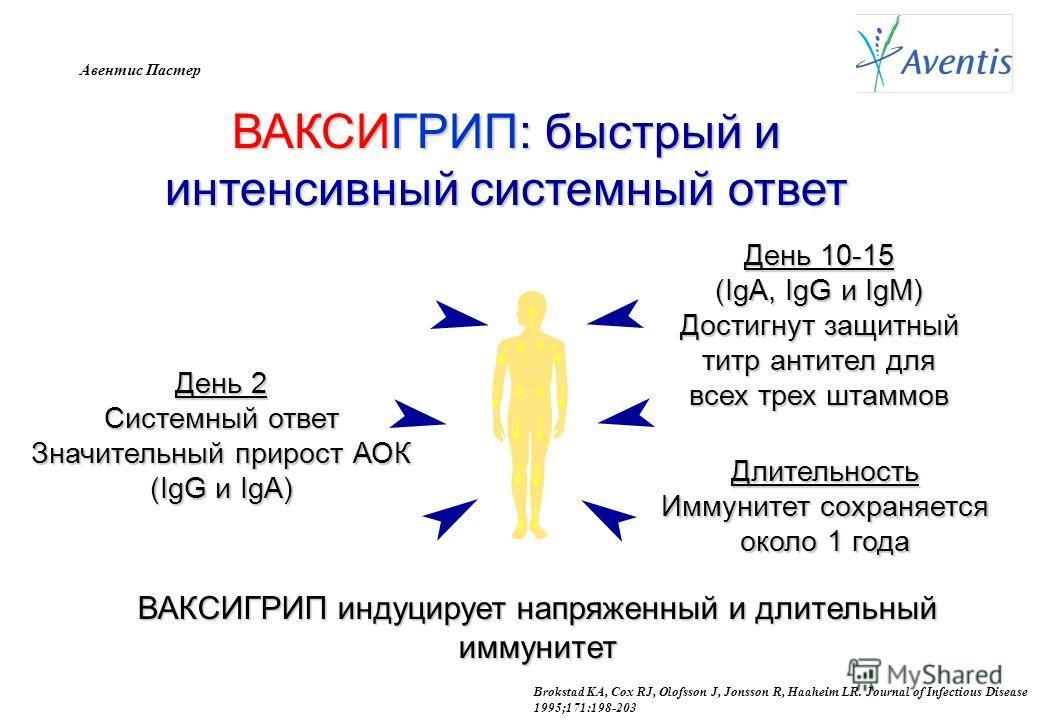 Авентис Пастер ВАКСИГРИП: быстрый и интенсивный системный ответ День 2 Системный ответ Значительный прирост АОК (IgG и IgA) День 10-15 (IgA, IgG и IgM) Достигнут защитный титр антител для всех трех штаммов Длительность Иммунитет сохраняется около 1 г