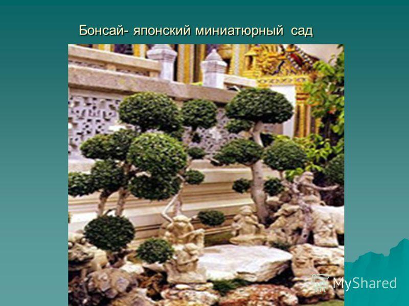 Бонсай- японский миниатюрный сад Бонсай- японский миниатюрный сад