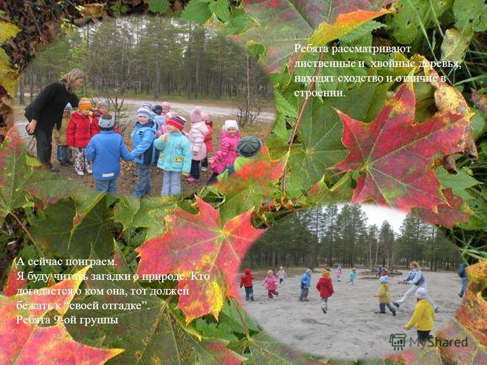 Ребята рассматривают лиственные и хвойные деревья, находят сходство и отличие в строении. А сейчас поиграем. Я буду читать загадки о природе. Кто догадается о ком она, тот должен бежать к своей отгадке. Ребята 9-ой группы