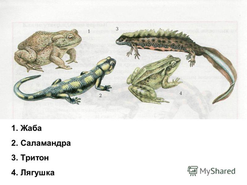1.Жаба 2.Саламандра 3.Тритон 4.Лягушка