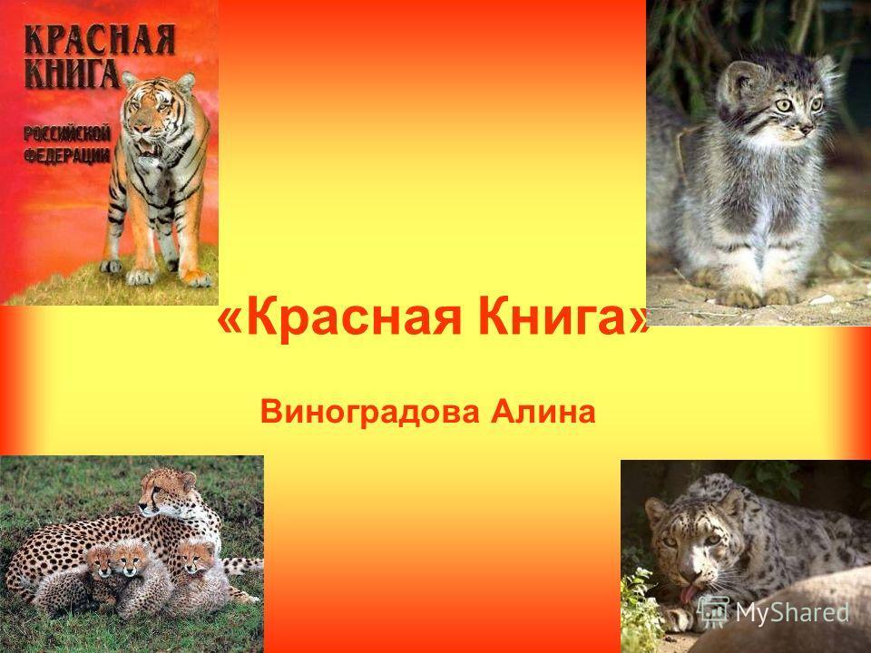 «Красная Книга» Виноградова Алина