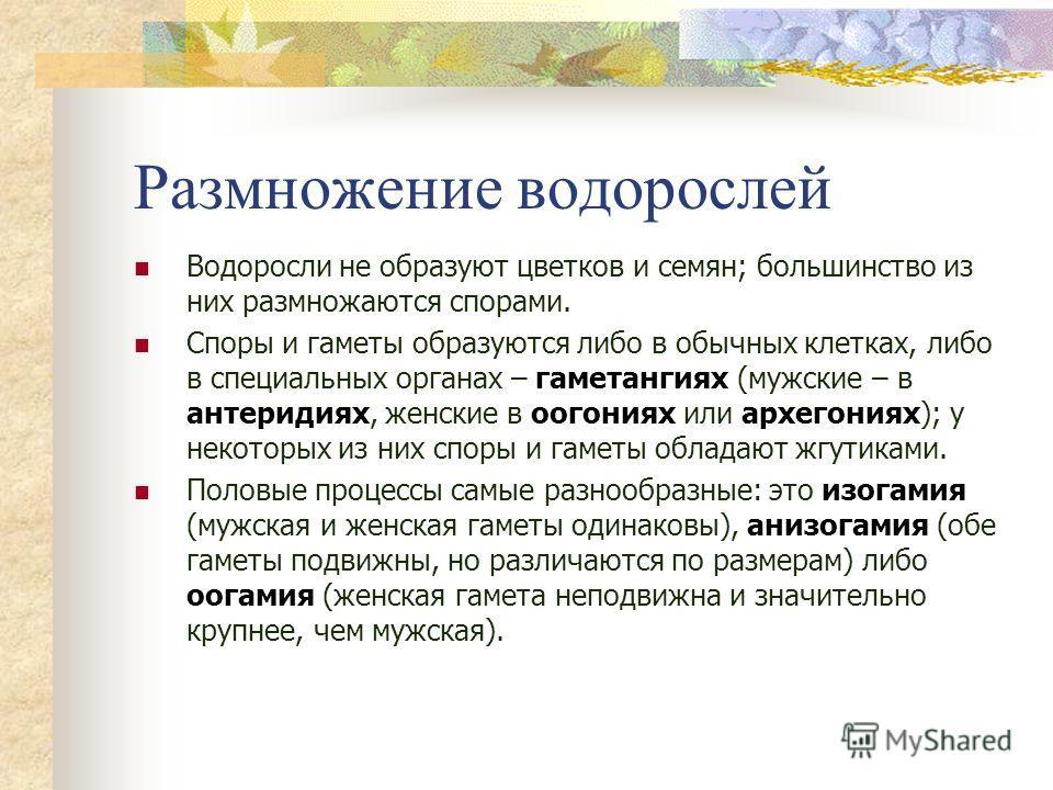 Размножение водорослей Водоросли не образуют цветков и семян; большинство из них размножаются спорами. Споры и гаметы образуются либо в обычных клетках, либо в специальных органах – гаметангиях (мужские – в антеридиях, женские в оогониях или архегони