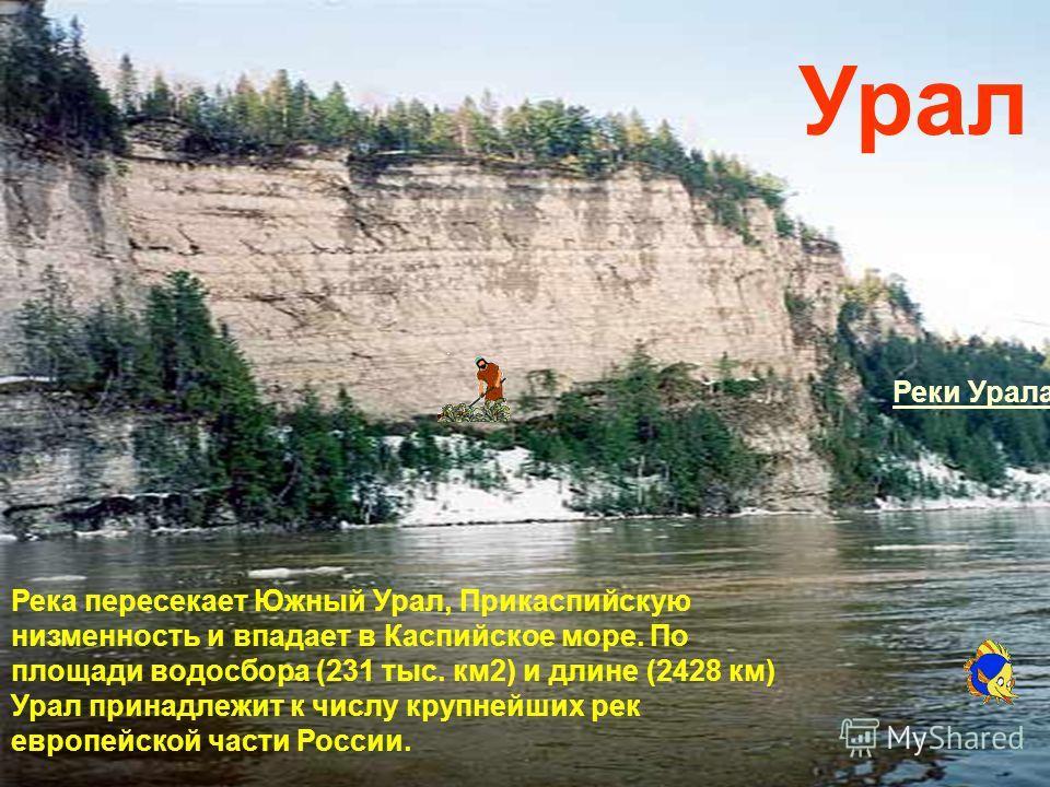 Река пересекает Южный Урал, Прикаспийскую низменность и впадает в Каспийское море. По площади водосбора (231 тыс. км2) и длине (2428 км) Урал принадлежит к числу крупнейших рек европейской части России. Урал Реки Урала