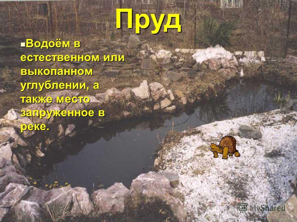 Пруд Пруд Водоём в естественном или выкопанном углублении, а также место запруженное в реке. Водоём в естественном или выкопанном углублении, а также место запруженное в реке.