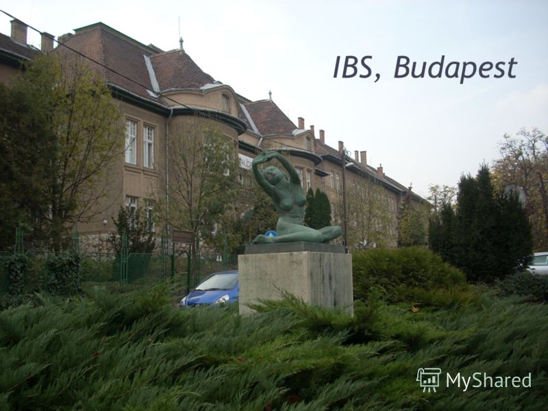 IBS, Budapest