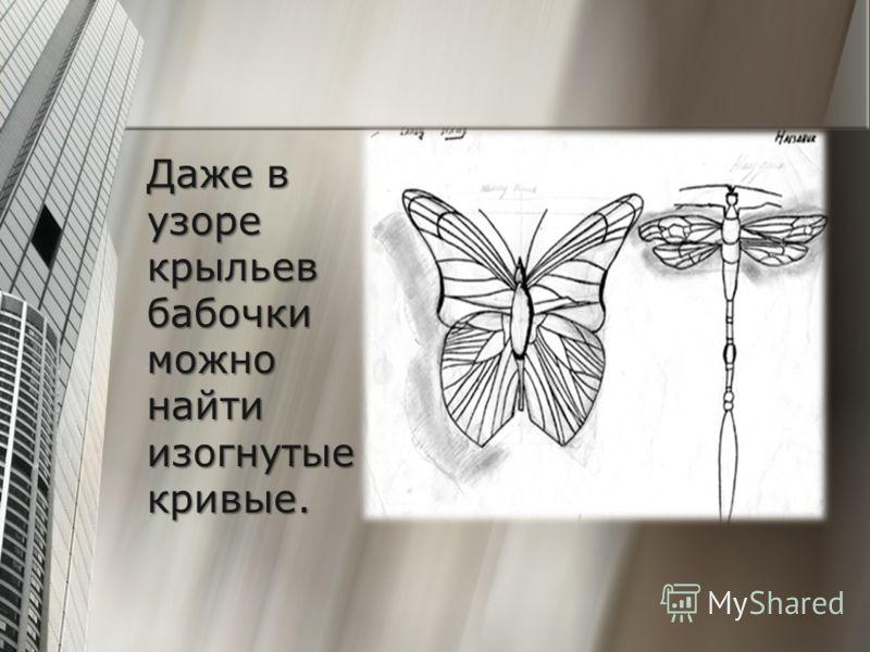 Даже в узоре крыльев бабочки можно найти изогнутые кривые.