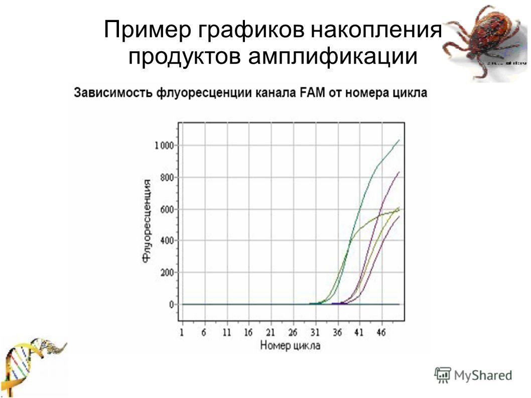 Пример графиков накопления продуктов амплификации
