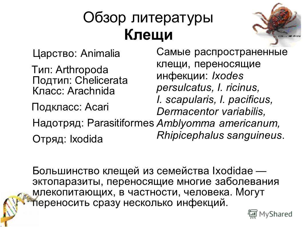 Царство: Animalia Тип: Arthropoda Подтип: Chelicerata Класс: Arachnida Подкласс: Acari Надотряд: Parasitiformes Отряд: Ixodida Большинство к лещ ей из семейства Ixodidae эктопаразиты, переносящие многие заболевания млекопитающих, в частности, человек