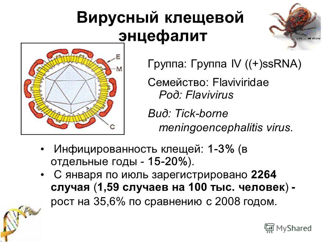 Вирусный клещевой энцефалит Группа: Группа IV ((+)ssRNA) Семейство: Flaviviridae Род: Flavivirus Вид: Tick-borne meningoencephalitis virus. Инфицированность клещей: 1-3% (в отдельные годы - 15-20%). С января по июль зарегистрировано 2264 случая (1,59