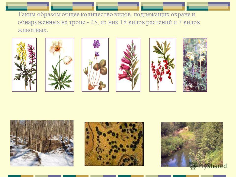 Таким образом общее количество видов, подлежащих охране и обнаруженных на тропе - 25, из них 18 видов растений и 7 видов животных.