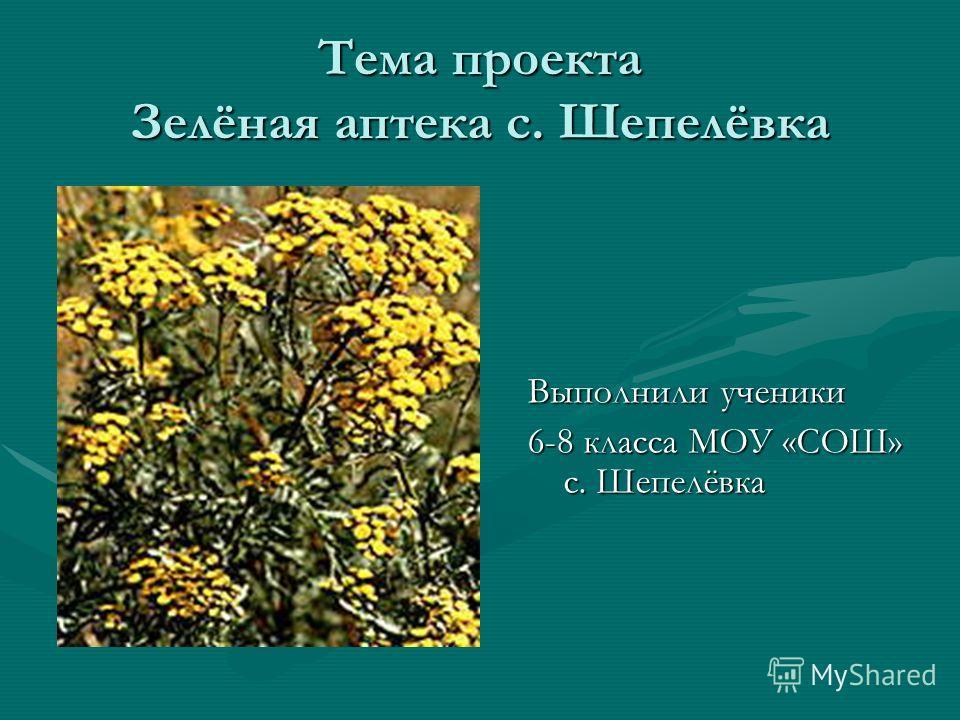 Тема проекта Зелёная аптека с. Шепелёвка Выполнили ученики 6-8 класса МОУ «СОШ» с. Шепелёвка