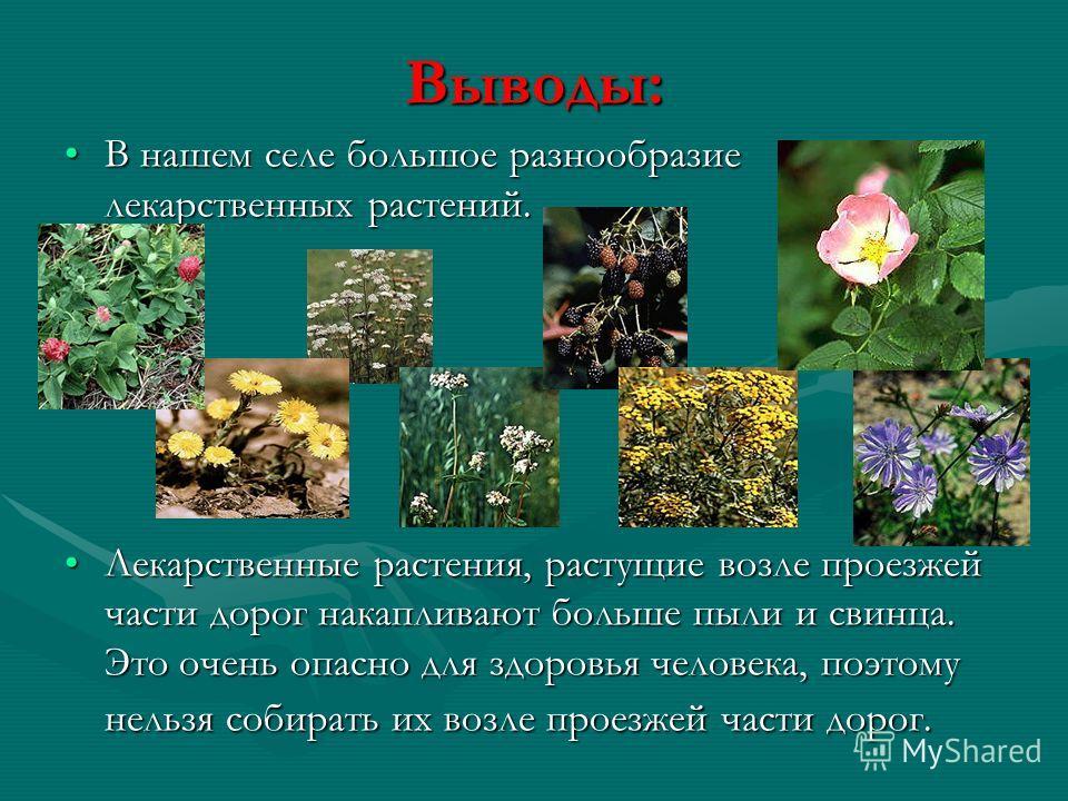 Выводы: В нашем селе большое разнообразие лекарственных растений.В нашем селе большое разнообразие лекарственных растений. Лекарственные растения, растущие возле проезжей части дорог накапливают больше пыли и свинца. Это очень опасно для здоровья чел