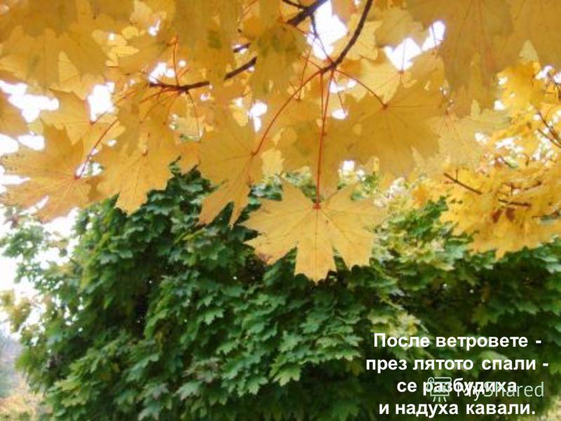 Как започна? Есента боядиса листата на брезата.
