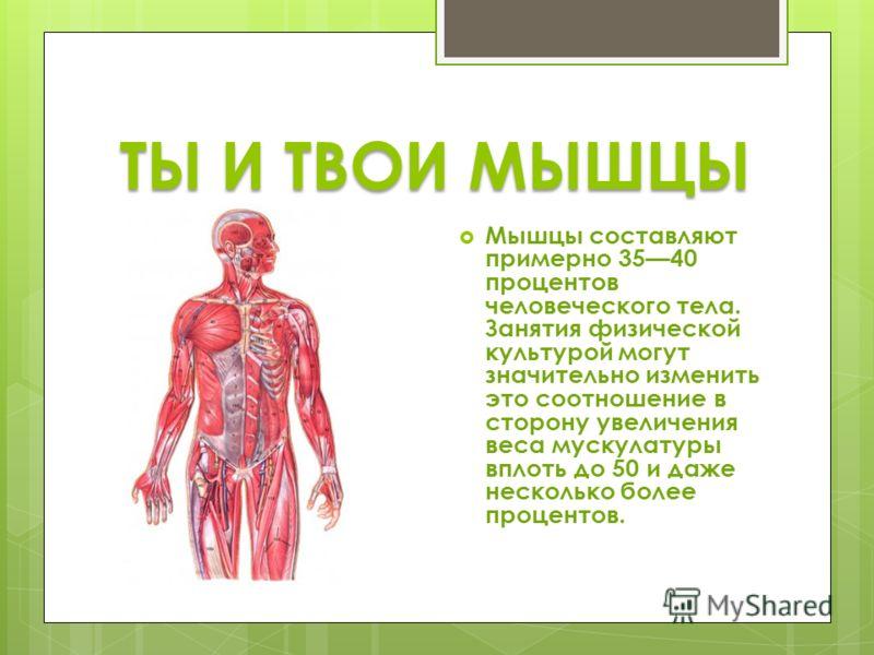 ТЫ И ТВОИ МЫШЦЫ Мышцы составляют примерно 3540 процентов человеческого тела. Занятия физической культурой могут значительно изменить это соотношение в сторону увеличения веса мускулатуры вплоть до 50 и даже несколько более процентов.