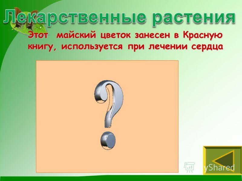 Подорожник Мать-и-мачеха Малина Научное название растения состоит из 2 слов и переводится как «кашель» и «выводить»
