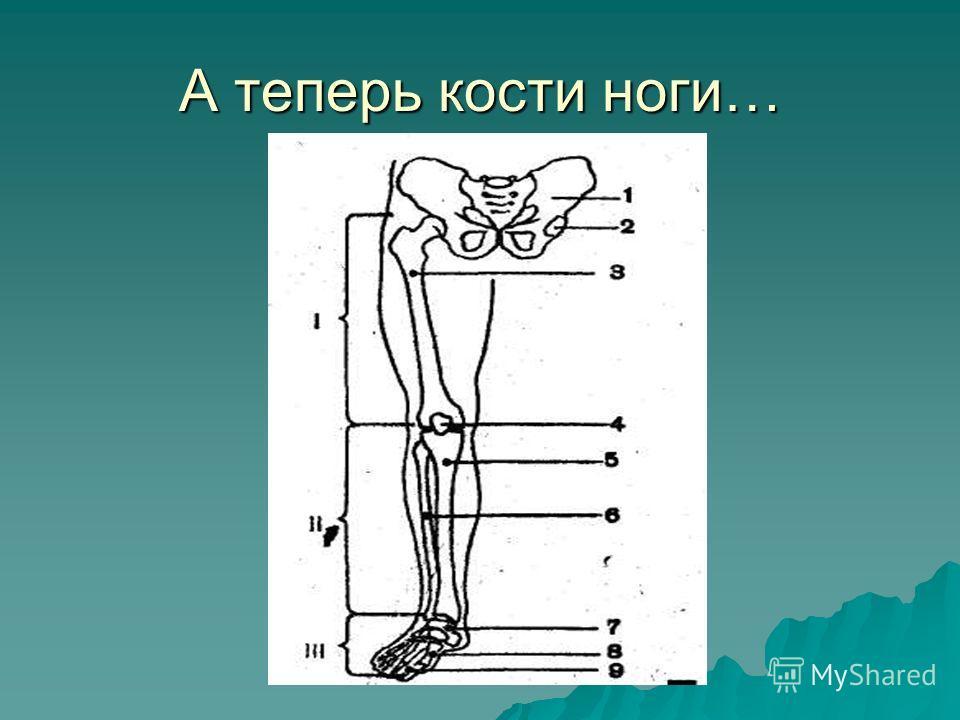 А теперь кости ноги…