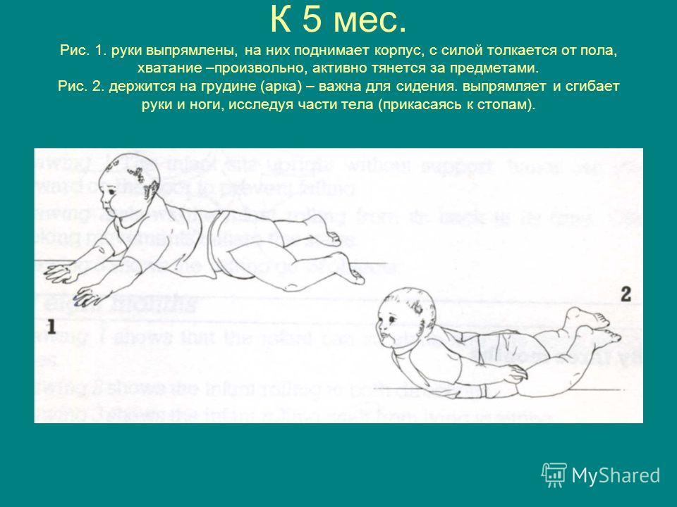 К 5 мес. Рис. 1. руки выпрямлены, на них поднимает корпус, с силой толкается от пола, хватание –произвольно, активно тянется за предметами. Рис. 2. держится на грудине (арка) – важна для сидения. выпрямляет и сгибает руки и ноги, исследуя части тела