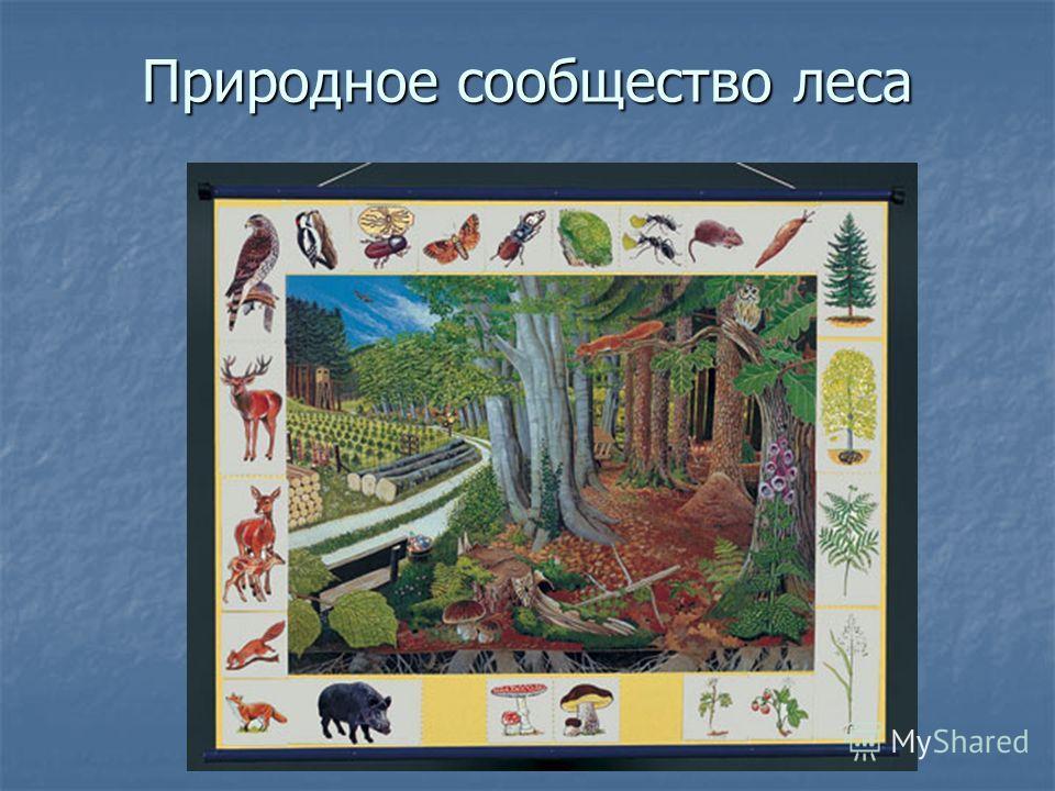 Природное сообщество леса