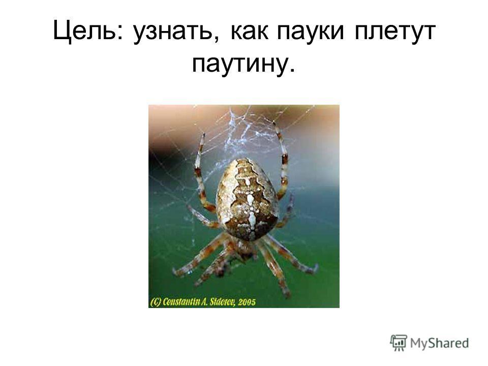 Цель: узнать, как пауки плетут паутину.