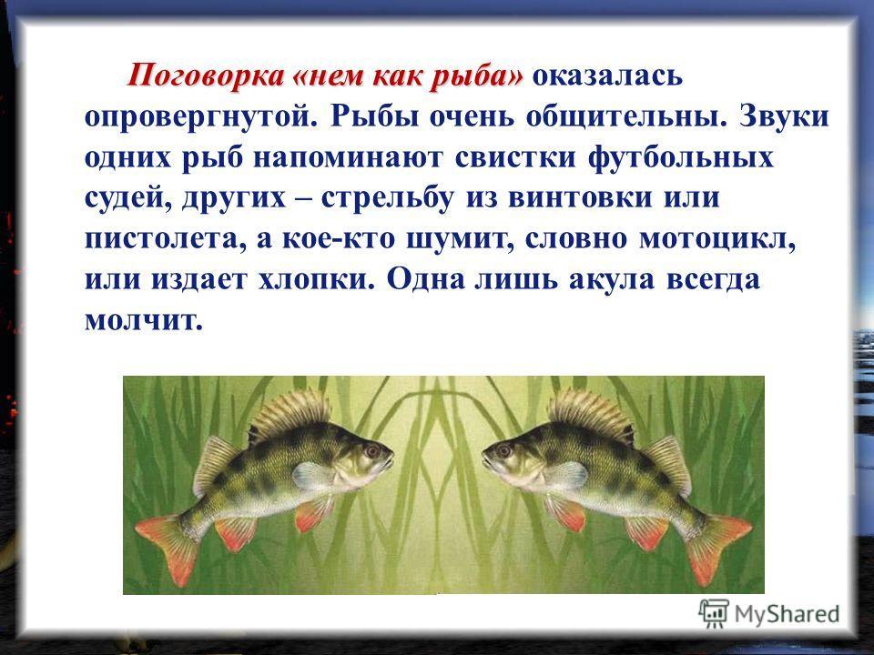 Поговорка «нем как рыба» Поговорка «нем как рыба» оказалась опровергнутой. Рыбы очень общительны. Звуки одних рыб напоминают свистки футбольных судей, других – стрельбу из винтовки или пистолета, а кое-кто шумит, словно мотоцикл, или издает хлопки. О