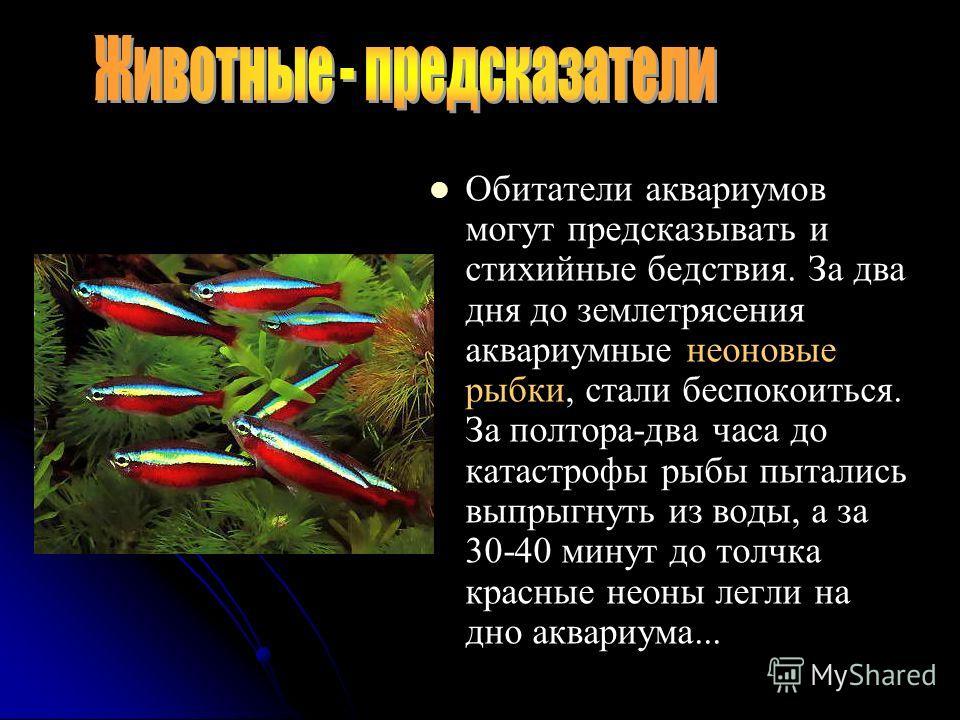 Обитатели аквариумов могут предсказывать и стихийные бедствия. За два дня до землетрясения аквариумные неоновые рыбки, стали беспокоиться. За полтора-два часа до катастрофы рыбы пытались выпрыгнуть из воды, а за 30-40 минут до толчка красные неоны ле