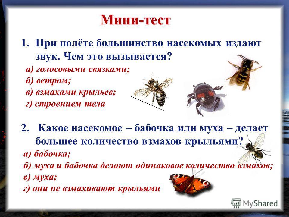 Мини-тест 1.При полёте большинство насекомых издают звук. Чем это вызывается? а) голосовыми связками; б) ветром; в) взмахами крыльев; г) строением тела 2. Какое насекомое – бабочка или муха – делает большее количество взмахов крыльями? а) бабочка; б)