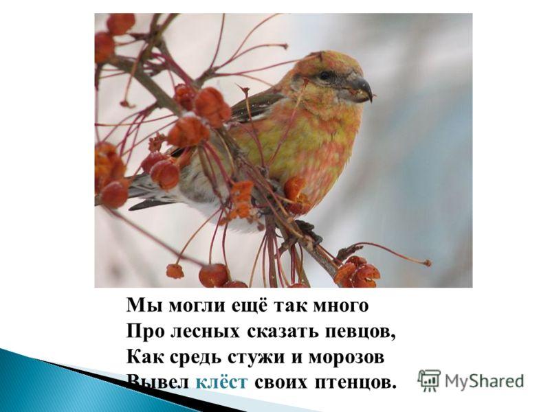 Мы могли ещё так много Про лесных сказать певцов, Как средь стужи и морозов Вывел клёст своих птенцов.