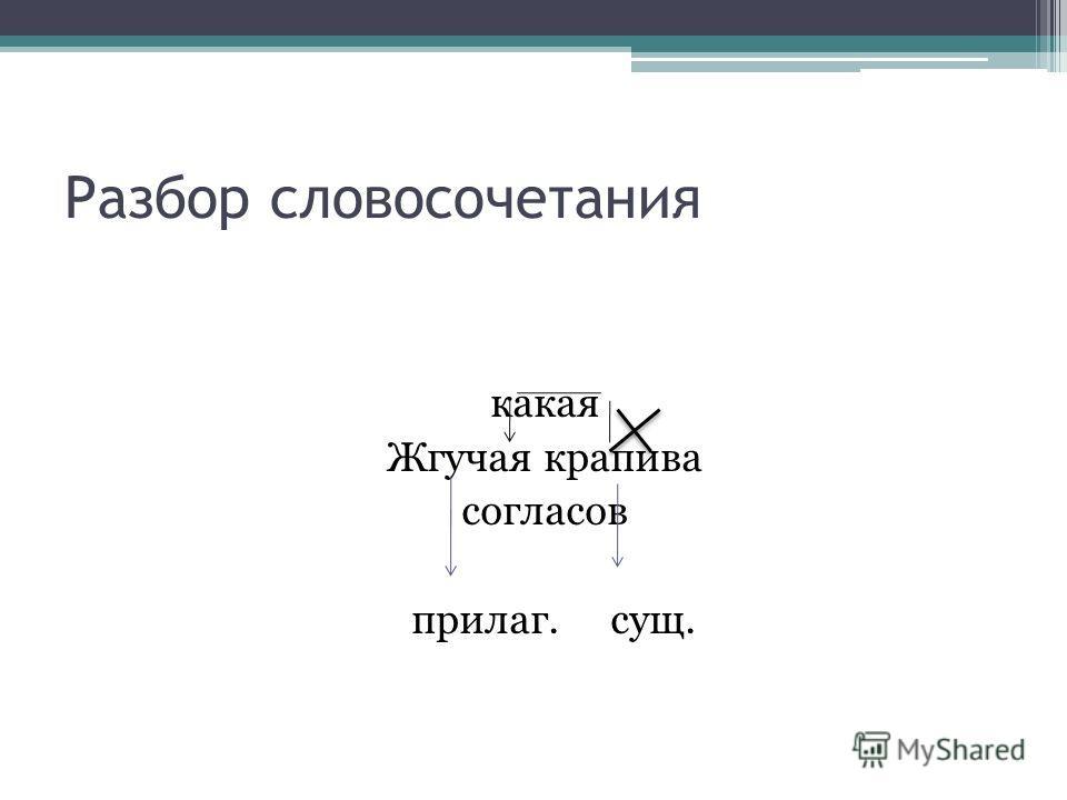 Разбор словосочетания какая Жгучая крапива согласов прилаг. сущ.