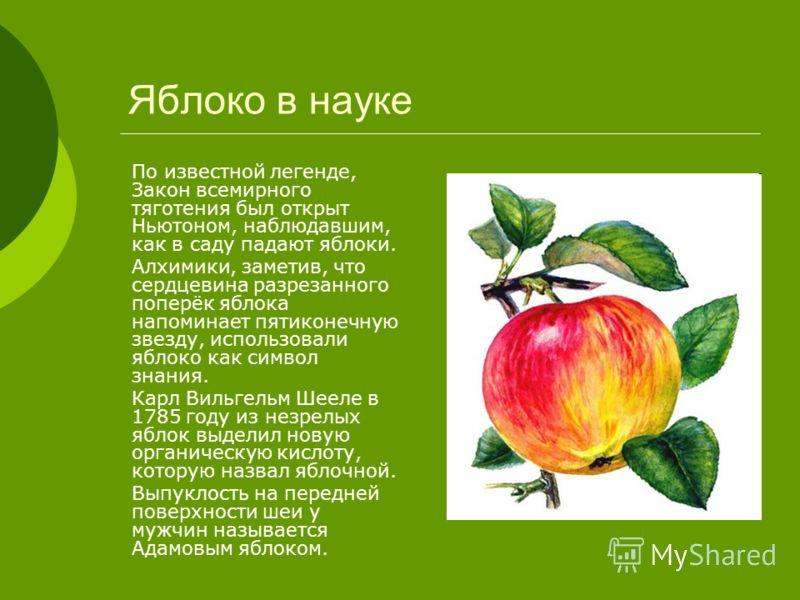 Яблоко в науке По известной легенде, Закон всемирного тяготения был открыт Ньютоном, наблюдавшим, как в саду падают яблоки. Алхимики, заметив, что сердцевина разрезанного поперёк яблока напоминает пятиконечную звезду, использовали яблоко как символ з