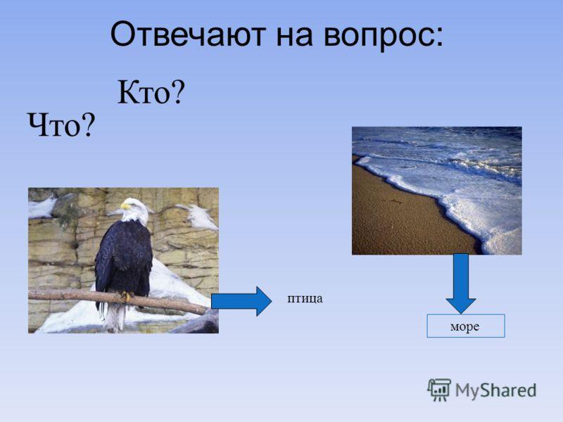 Отвечают на вопрос: Кто? Что? море птица