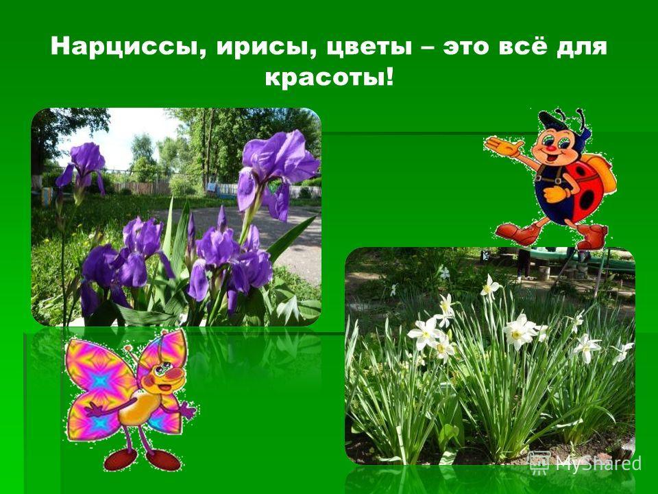 Нарциссы, ирисы, цветы – это всё для красоты!