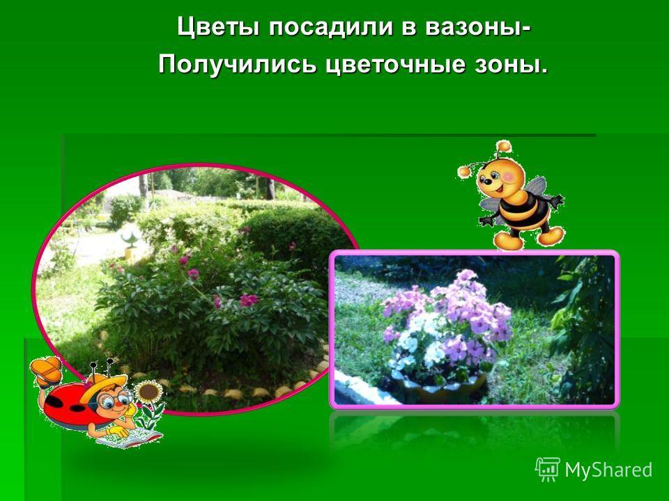 Цветы посадили в вазоны- Получились цветочные зоны.