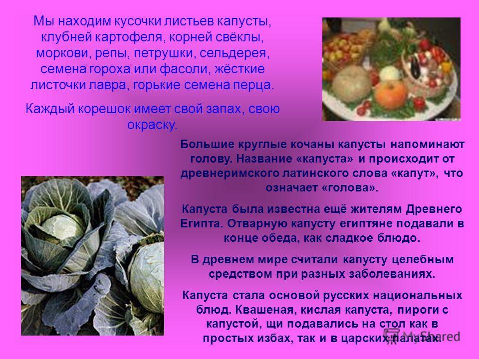 Мы находим кусочки листьев капусты, клубней картофеля, корней свёклы, моркови, репы, петрушки, сельдерея, семена гороха или фасоли, жёсткие листочки лавра, горькие семена перца. Каждый корешок имеет свой запах, свою окраску. Большие круглые кочаны ка