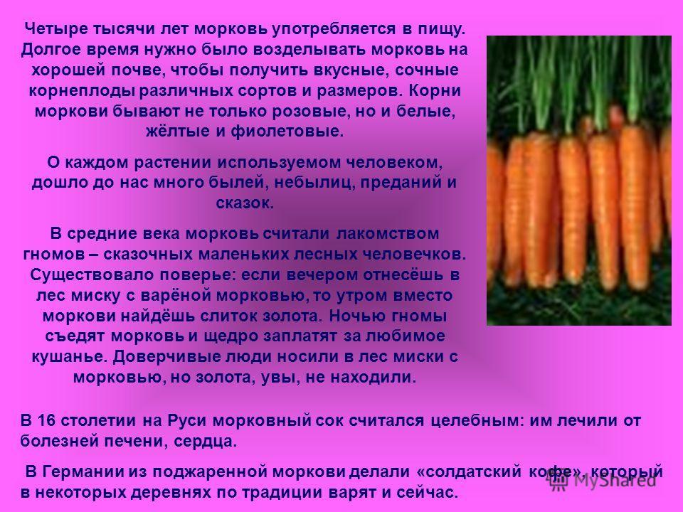 Четыре тысячи лет морковь употребляется в пищу. Долгое время нужно было возделывать морковь на хорошей почве, чтобы получить вкусные, сочные корнеплоды различных сортов и размеров. Корни моркови бывают не только розовые, но и белые, жёлтые и фиолетов