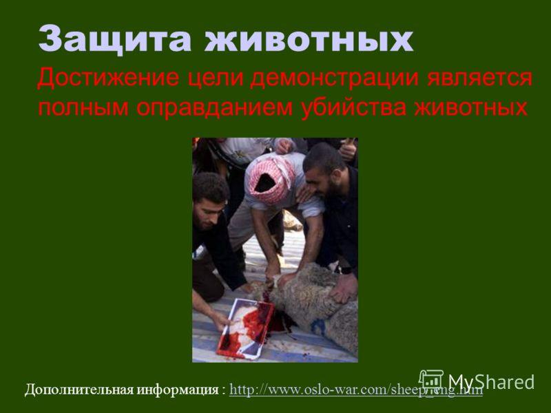 Защита животных Достижение цели демонстрации является полным оправданием убийства животных Дополнительная информация : http://www.oslo-war.com/sheep_eng.htmhttp://www.oslo-war.com/sheep_eng.htm