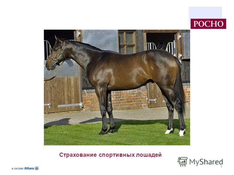 1 Страхование спортивных лошадей