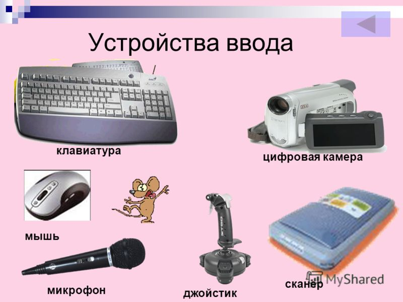 Устройства ввода клавиатура мышь микрофон цифровая камера джойстик сканер