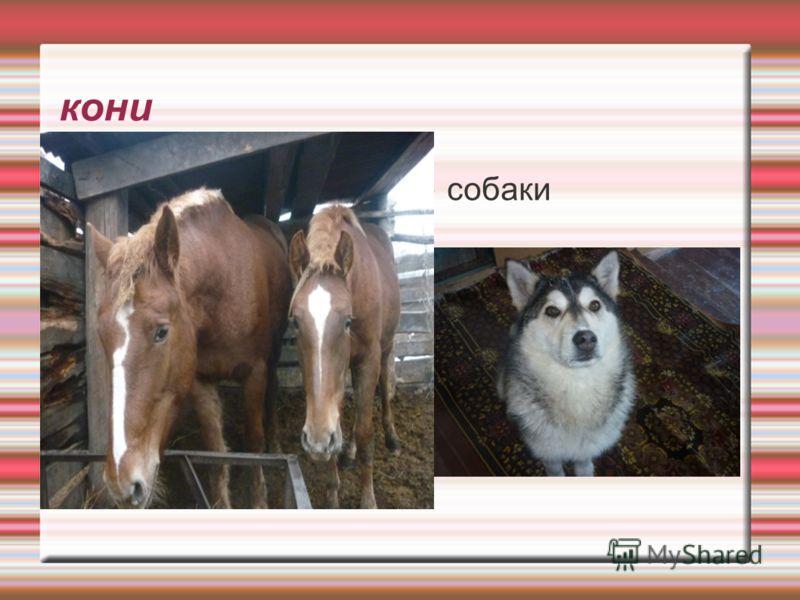 кони собаки