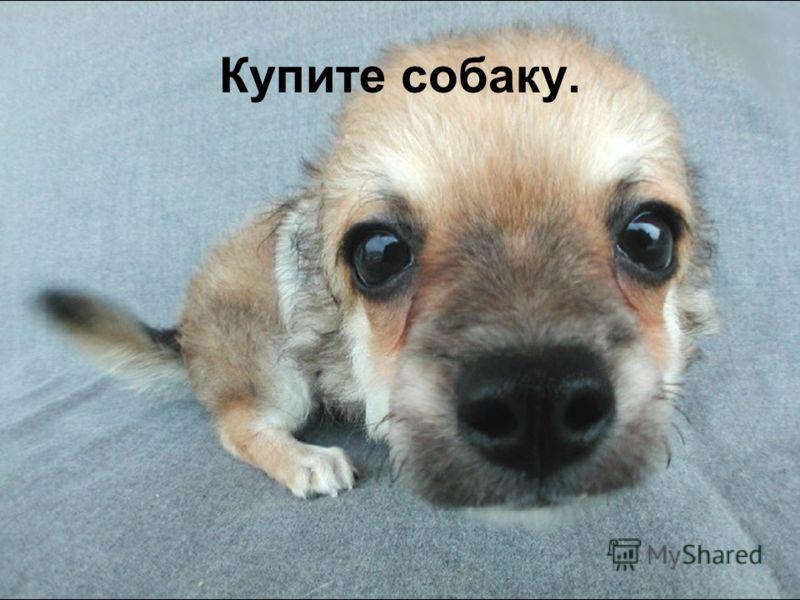 Купите собаку.